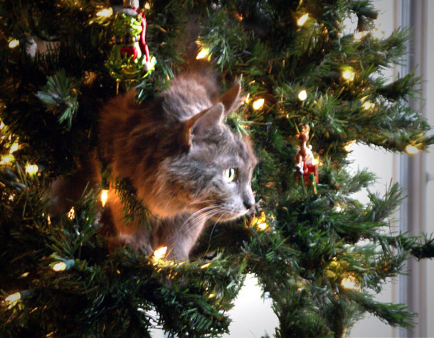 Living-Christmas-Tree-Ornament-Climbing-the-Christmas-tree-is-one-of-Cosmos-greatest-joys-in-life