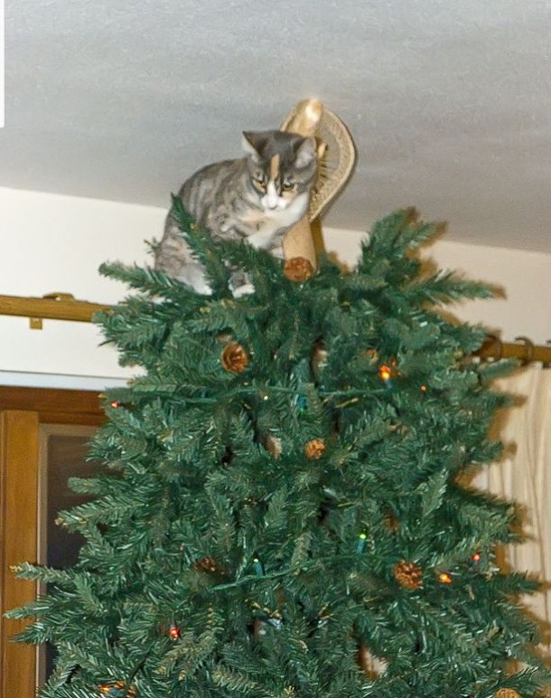 Cats just love climbing christmas trees Christmas tree cat tower