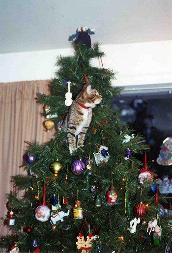 cats-christmas-trees-12152010-03