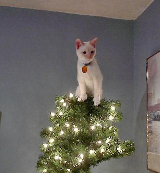 cats-christmas-trees-12152010-11