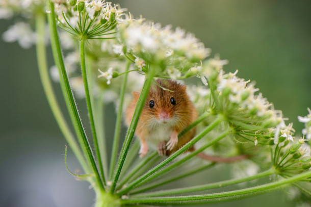wild-mouse-photography-11