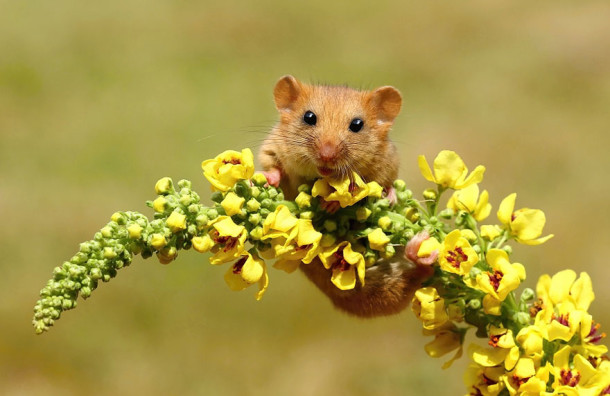 wild-mouse-photography-3