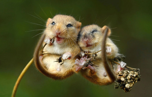 wild-mouse-photography-6