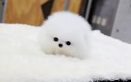 chubby-puppies-bear-cub-look-alikes-17-1__605