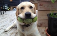 dogs-showing-off-toys-5