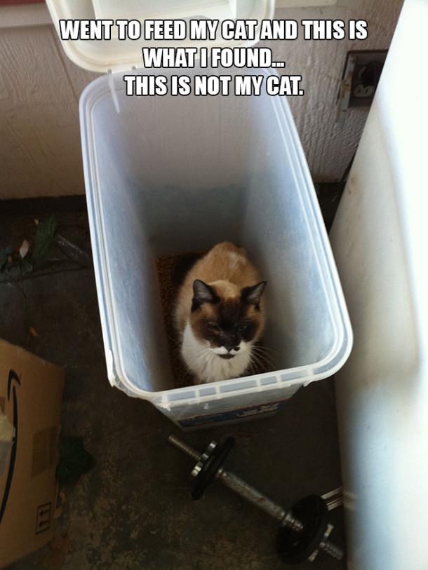 cat-feed