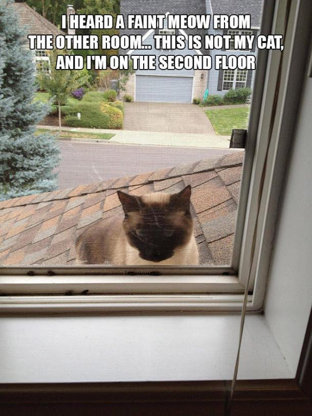 cat-second-floor