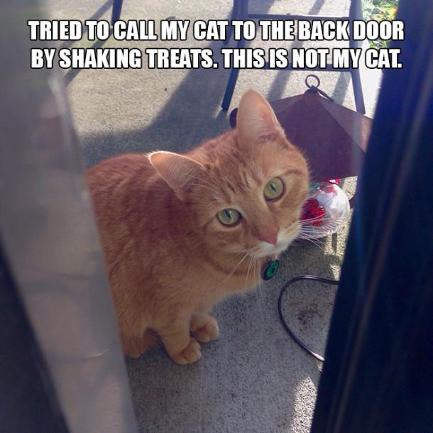 cat-treats
