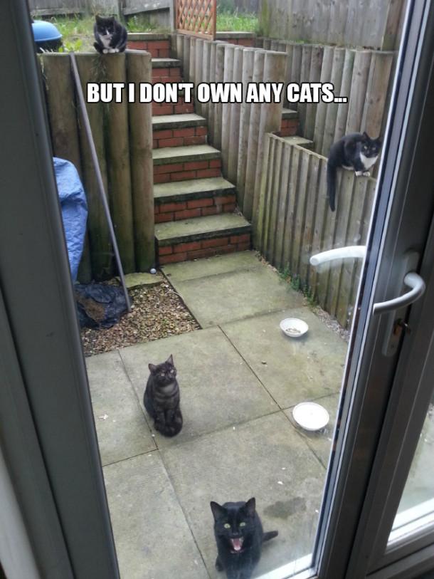 cat-yard